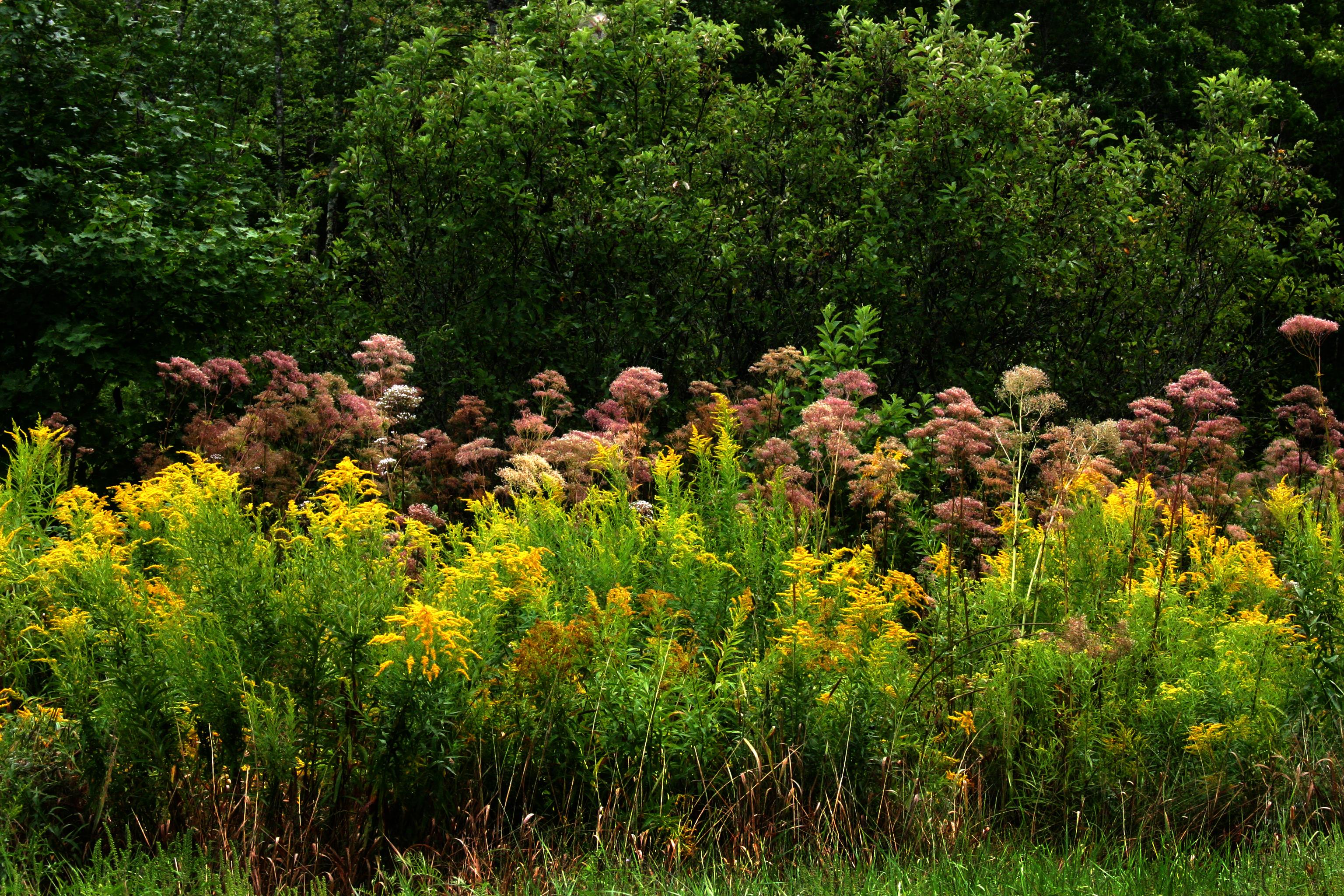 wildflowers copy