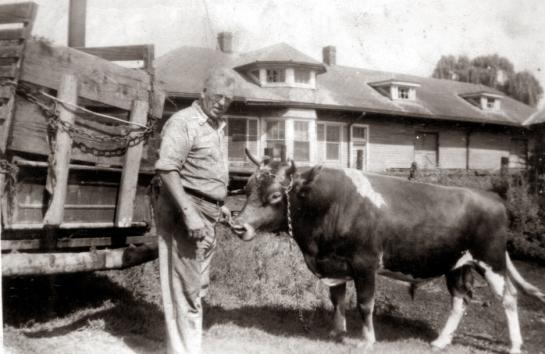 Papa E and bull