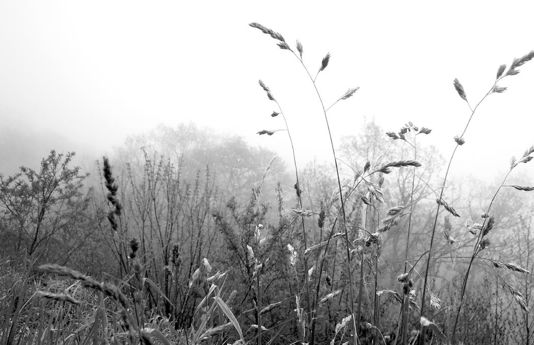 Grass B&W