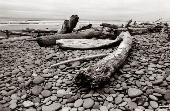 Olympic Coast, Washington