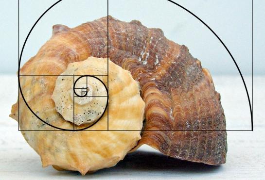 fibonacci whelk