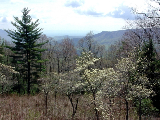 Linville Gorge1