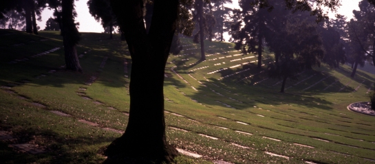 forest lawn 1