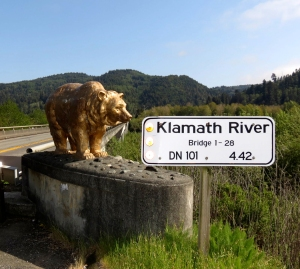 klamath river bear
