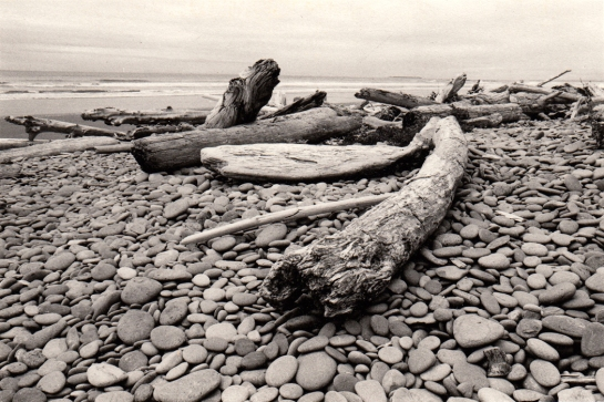 Olympic National Park seashore