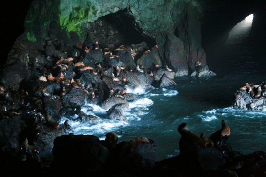 sea lion caves interior