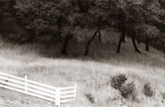 Sonoma Valley fence