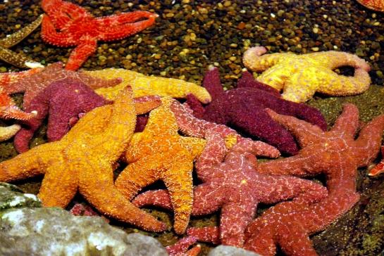 starfish pile