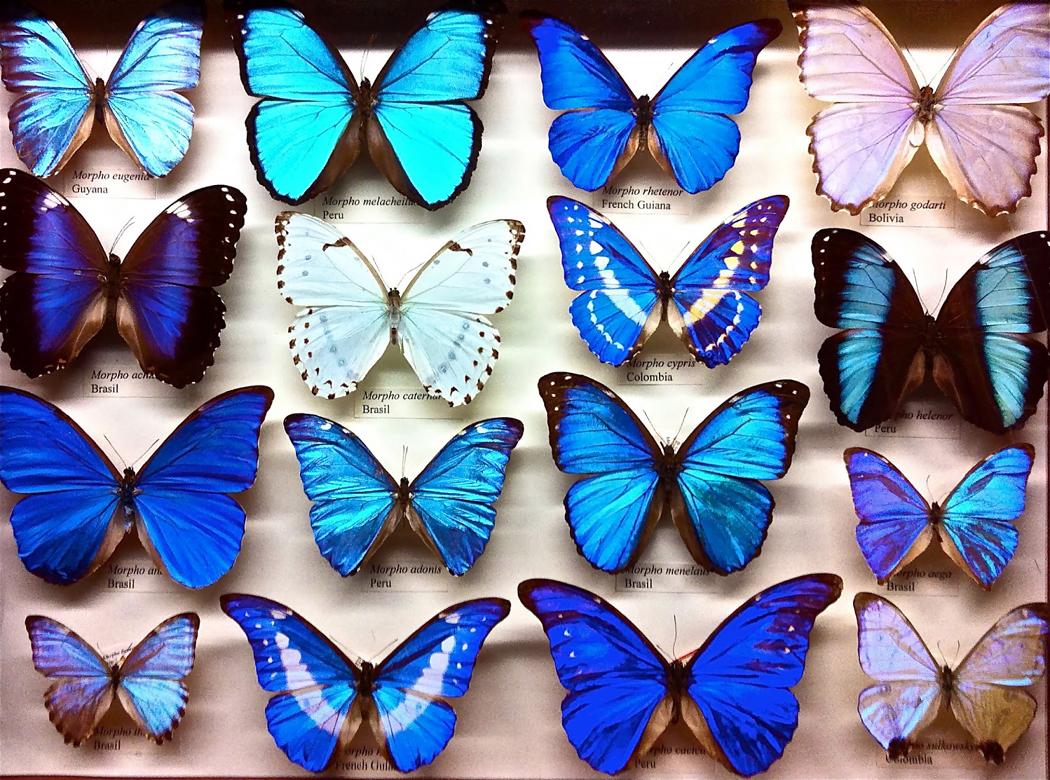 museum butterflies