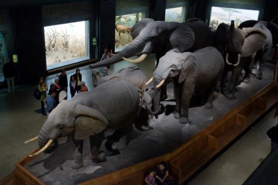 museum elephants
