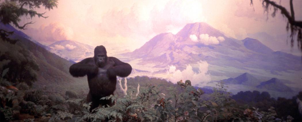 museum gorilla