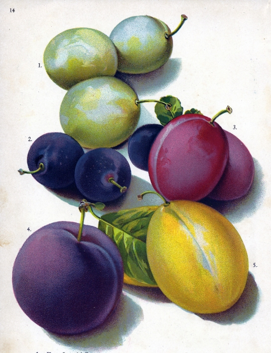 plums 2