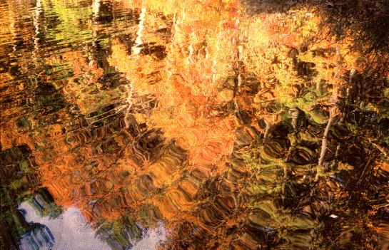 Fall color reflected in surface of Walden Pond, Concord, Mass.