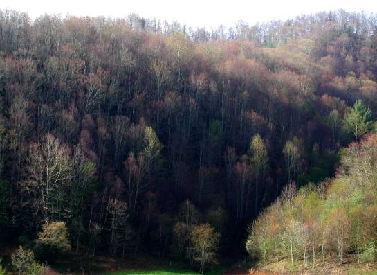 Ashe County hillside