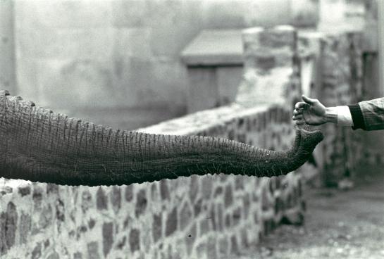 winogrand elephant 2