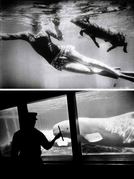 winogrand underwater pair