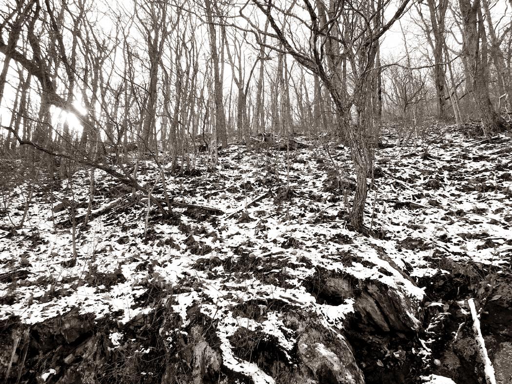 snow on forest floor 2