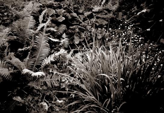 Doug's Garden