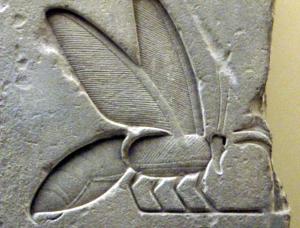 egyyptian bee