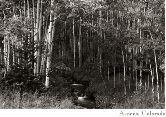 Aspens, Colo