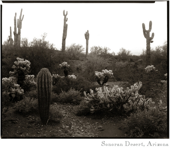 Desert scene copy