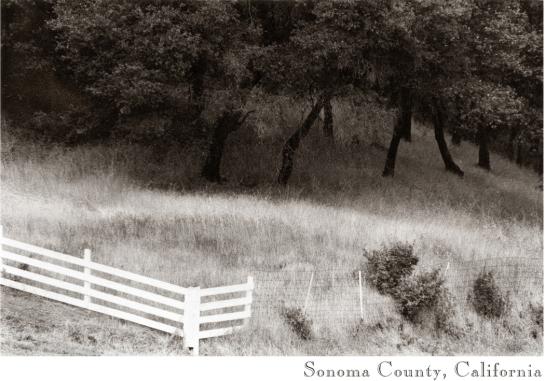 Sonoma Valley fence