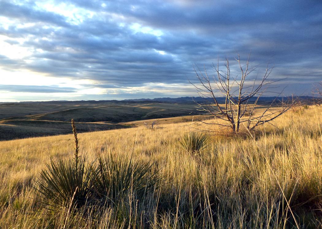 little bighorn evening