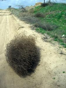 tumbleweed 1