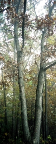 wisconsin tree beside mississippi