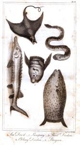 goldsmith fish 2