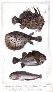 goldsmith fish 3