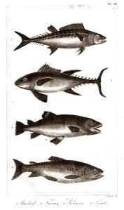 goldsmith fish 5