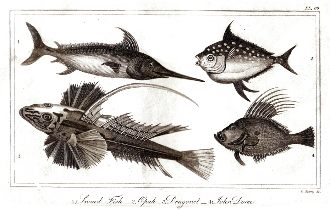 goldsmith fish 8 horizonntal