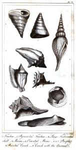 goldsmith shells 1