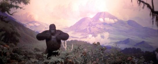 Gorilla, Am Mus Nat Hist04 copy