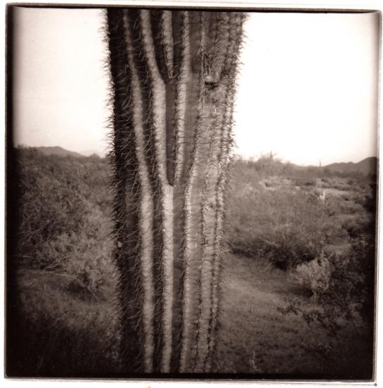 03 Organ Pipe Cactus Diana pair 3