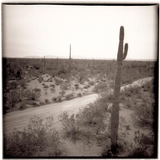 06 Saguaro Organ Pipe Cactus NP Ariz