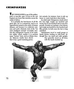chimpanzee 2