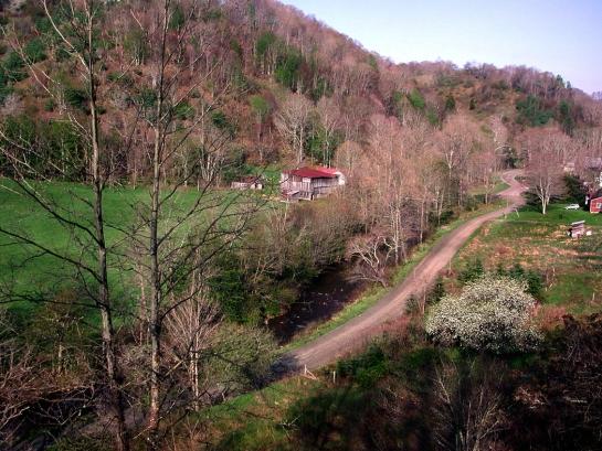 Ashe County road, creek &dogwoo