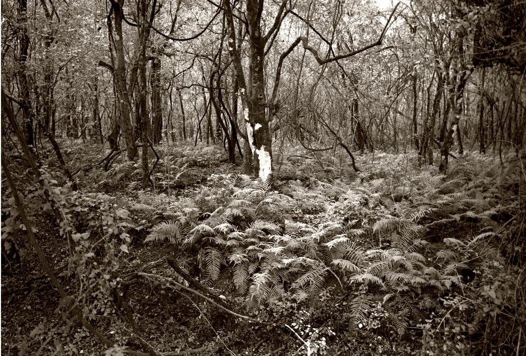 atchafalaya thicket