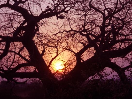rosy fingered dawn