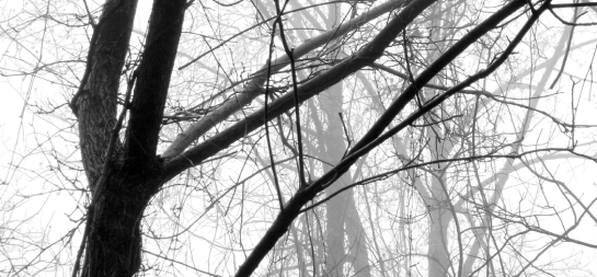 ABENDROT tree in fog