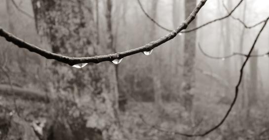 SEPTEMBER twig