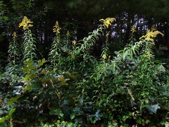 weeds 07