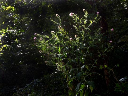 weeds 08
