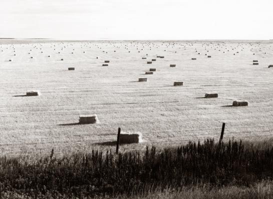 Joes Colo haystacks
