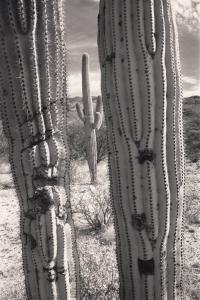 Saguaro NP Ariz