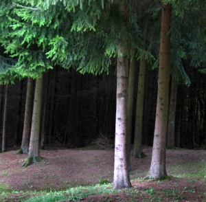 Forests of Verdun