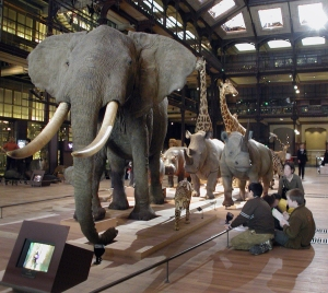 jardin elephant