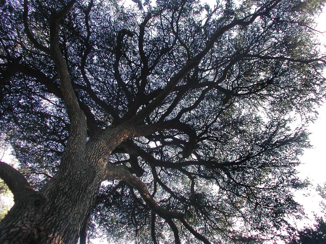 jardin tree